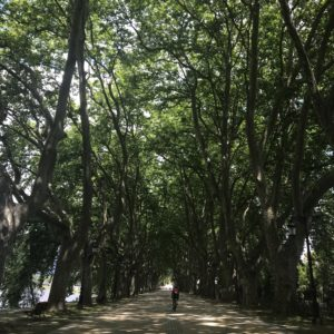 カミーノ「ポルトガル人の道」をポンテ・デ・リマへ向かう