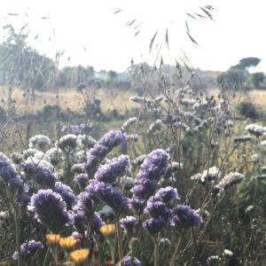 カミーノ「ポルトガル人の道」の草花