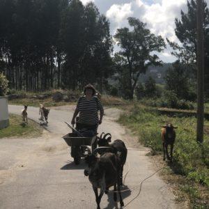 カミーノ「ポルトガル人の道」ポンテ・デ・リマへ向かって出発