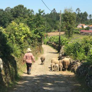 カミーノ「ポルトガル人の道」Rubiaes峠越え