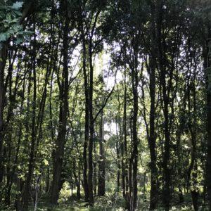カミーノ「ポルトガル人の道」、Vairaoの修道院を出て、森を進む